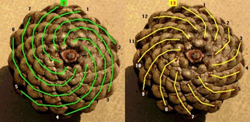 secuencia-fibonacci-min